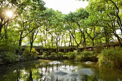 Tianyige Garden in Ningbo, China. Green garden in sunset , south China style Stock Photography