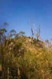 TianZhu góra XiaMen Chiny Zdjęcia Stock