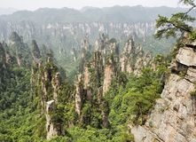 Tianzi Mountain column karst at Wulingyuan Scenic Area, Zhangjiajie National Forest Park, Hunan, China.  stock images