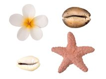 Tiare flower, starfish and shells Stock Photo