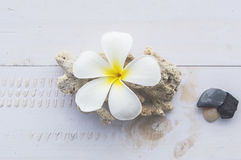 Tiare flowers,corals and stones. Stock Photography