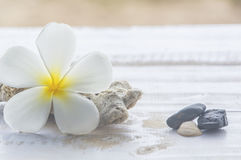 Tiare flowers,corals and stones. Stock Photos