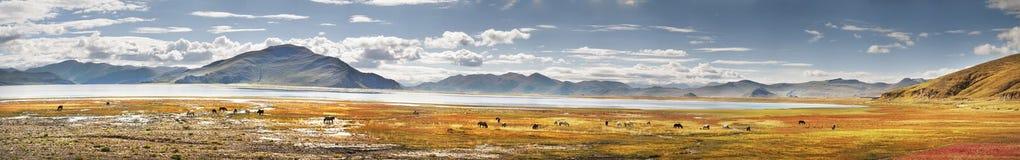Tibet Stock Afbeelding