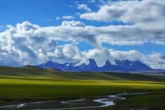 Tibet ali Royalty Free Stock Image