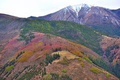 Tibet-Farbe des Waldes Lizenzfreie Stockfotografie