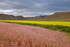 Tibet fields Stock Image
