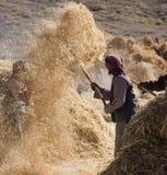 Tibet - Havest Zeit Stockfotos