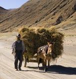 Tibet - Havest Zeit Lizenzfreie Stockbilder