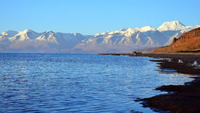 Tibet. Lake Mansarovar. Early morning. Stock Images