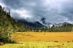 Tibet landscape. Two horse walking in rain Royalty Free Stock Photo