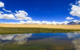 Tibet landskap royaltyfri fotografi