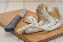 Tibet Oyster Mushroom on wooden cutting board with knife, ready Stock Image