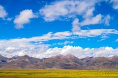 Tibet plateau Royalty Free Stock Photography