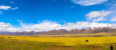 Tibet plateau Royalty Free Stock Image