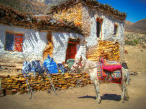 Tibet post. Post hors on the rest in Tibet Stock Images