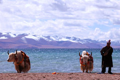Tibet's snow mountains Stock Images