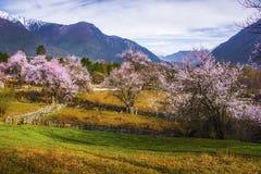 Tibet's spring Royalty Free Stock Image