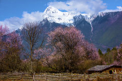 Tibet's spring. Nyingchi, bome low altitude areas in Tibet, spring is very beautiful, in the set off of blue sky white clouds, the distant snow-capped mountains royalty free stock photos