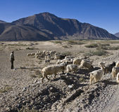 Tibet - Shepherd with his herd - Tsetang Stock Photo