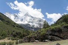 Tibet snow mountain with Grassland Stock Photo
