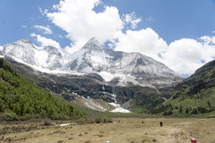 Tibet snow mountain with Grassland Royalty Free Stock Images