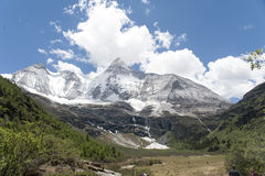 Tibet snow mountain with Grassland. In China Royalty Free Stock Image