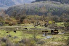 A Tibet village on the meadow Stock Photos