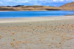 Tibet Yamdrok lake a flock of birds Stock Image