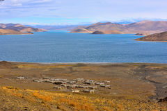 Tibet Yamdrok lake village. Yamdrok lake(Yangzhuoyongcuo) 2016 in Tibet, the sunset, the snow-capped mountains, clear lakes, the sheep are eating grass by the Stock Images