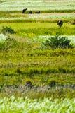 Tibetan agricultural landscape Stock Images