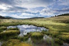 Tibetan alpine grassland Stock Photos
