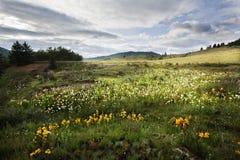Tibetan alpine grassland Royalty Free Stock Photos