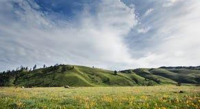 Tibetan alpine grassland Royalty Free Stock Photography