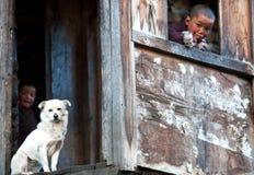 Tibetan boys with white dog Stock Images