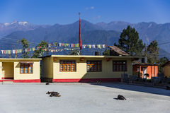 Tibetan Buddhism Temple with dogs sleep on the floor and mountain view in Sikkim, India Stock Images