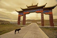Tibetan Buddhism temple inside Royalty Free Stock Photos