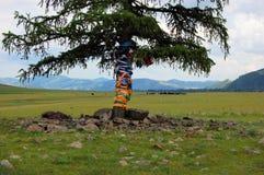 Tibetan Buddhist prayer flags around tree Royalty Free Stock Image