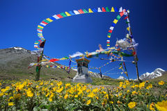 Tibetan buddhist prayer flags and stupa on wild flower field in Royalty Free Stock Photo