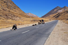 Tibetan Buddhists pilgrimage route stock photos