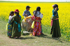 Tibetan children in rape seed field Royalty Free Stock Images