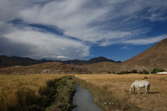 Tibetan  countryside Royalty Free Stock Photography