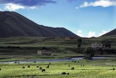 Tibetan dorp met yaks stock afbeelding