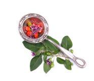 Tibetan Goji berries Royalty Free Stock Images