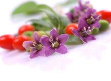 Tibetan Goji berries fruit Royalty Free Stock Images