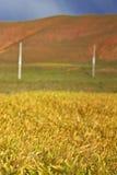 Tibetan Grasslands Stock Image