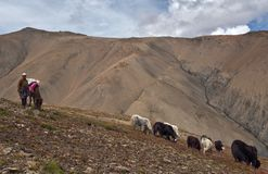 Tibetan herdsman Royalty Free Stock Photos