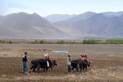Tibetan landbouwers royalty-vrije stock foto