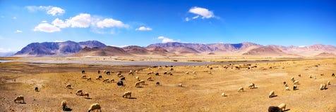 Tibetan landscape panorama Royalty Free Stock Photo