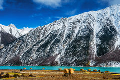 The Tibetan landscape Royalty Free Stock Image