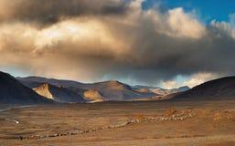 tibetan liggande Royaltyfri Bild
